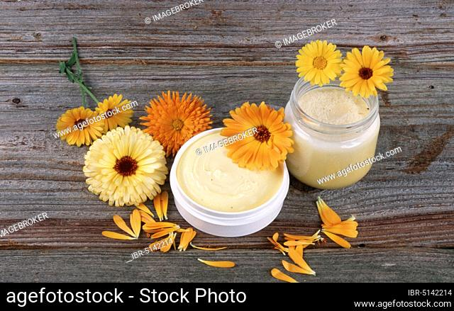 Common Marigold (Calendula officinalis), ointment and flowers, flowers, garden plants, garden medicinal herbs, composite plants (Asteraceae), cephalopods