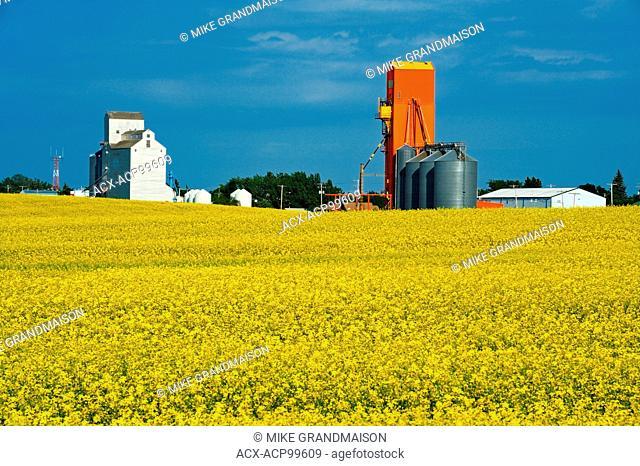 Canola and grain elevators Kyle Saskatchewan Canada