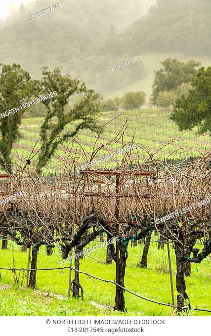 USA, CA, Healdsberg. Vineyards in the Sonoma Valley. Wine growing region in southern California famous for making fine Zinfandel
