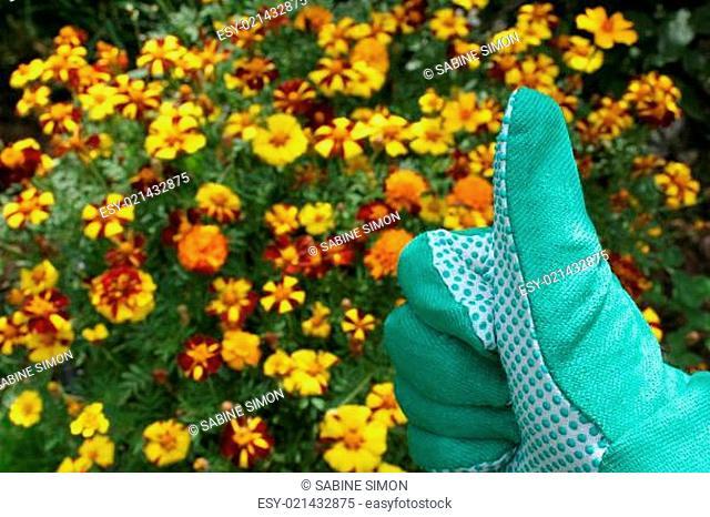 Grüner Daumen bei der Gartenarbeit