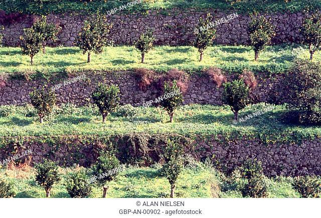 Plantation, Portugal