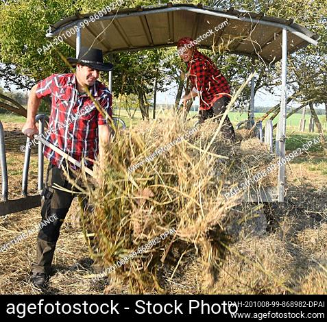 01 October 2020, Saxony, Wermsdorf: Cora Lechner prepares organic hay for her animals in her bison enclosure with her life partner Johannes Boos at a storage...