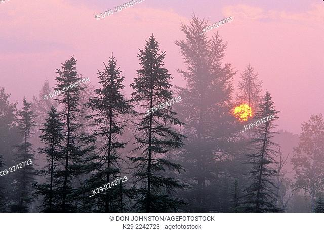 Sunrise over a wetland, Greater Sudbury, Ontario, Canada