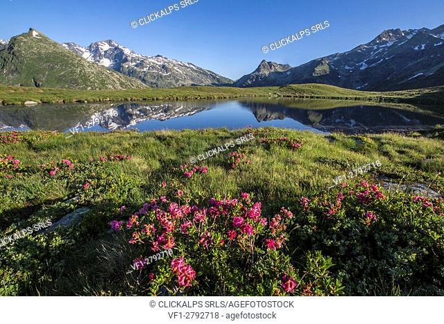Rhododendrons surround Peak Tambò reflected in Lake Andossi at sunrise Chiavenna Valley Valtellina Lombardy Italy Europe