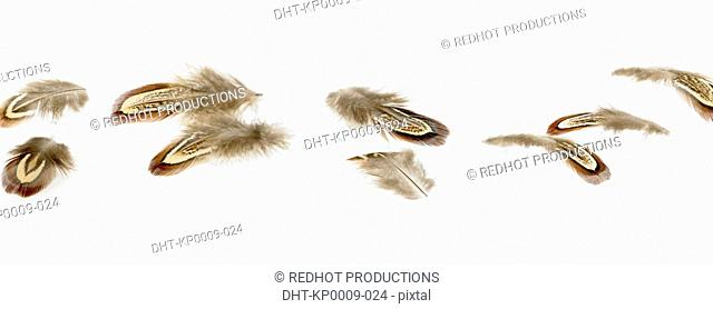 Scattered brown Feathers
