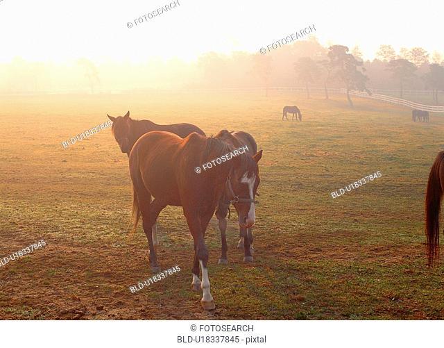 mammal, animal, vertebrate, field, horse, film