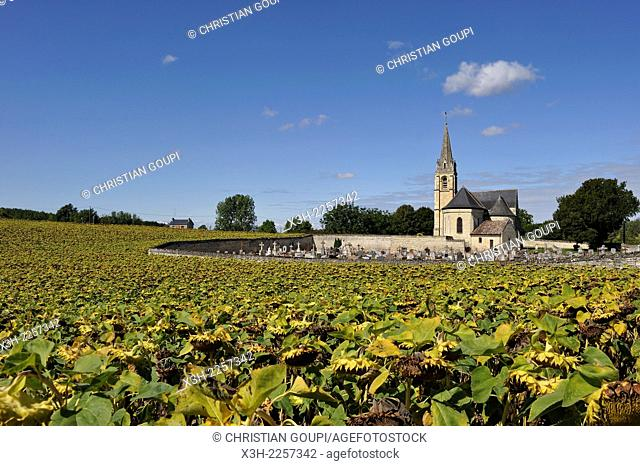 Church of the village La Roche-Clermault surrounded by sunflower field, Indre-et-Loire department, Centre region, France, Europe