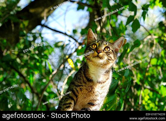 Tigerkatze schaut mit Blick nach vorne