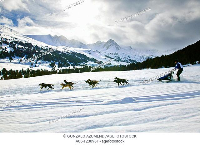 Ski Station  Grand Valira  Grau Roig  Encamp Province  Andorra  Pirena  Sled dog race in the Pyrenees going through Spain, Andorra and France