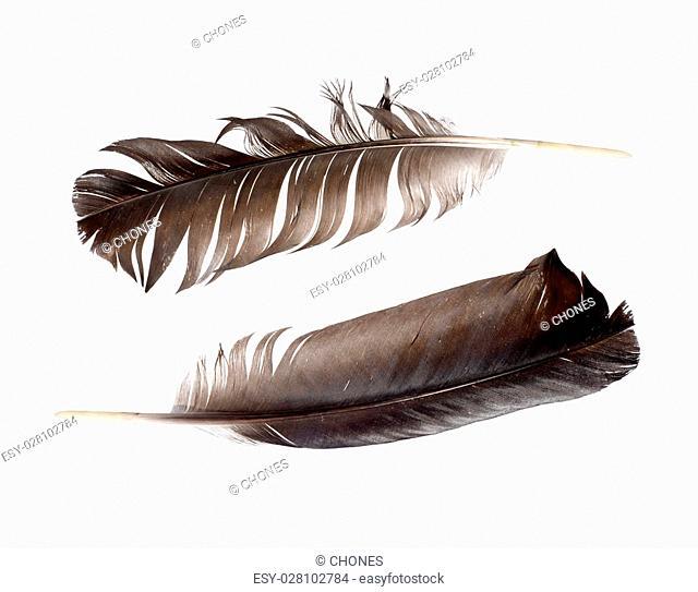 black feathers isolated on white background