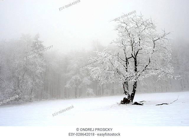 Solitary tree in winter, snowy landscape with snow and fog