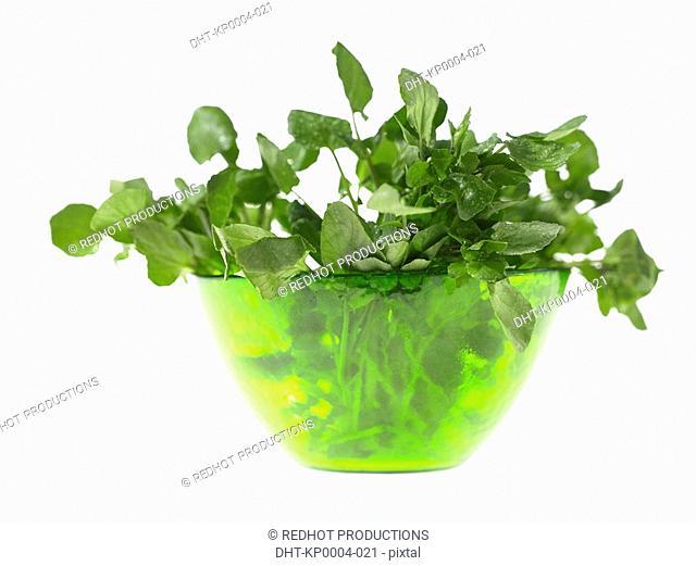 Bowl of Watercress