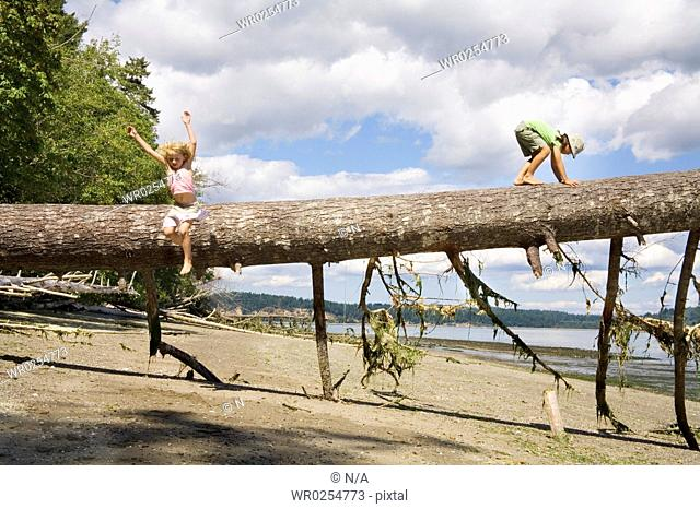 Children balancing on fallen tree