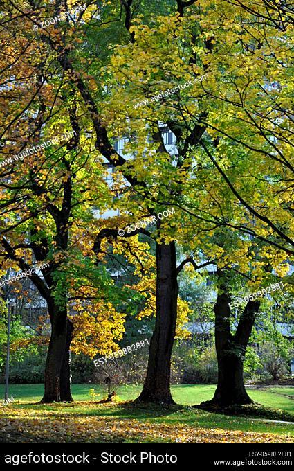 Parkanlage Römerwall , Mainz, parkanlage, römerwall, wall, wallanlage, stadtpark, herbst, park, baum, bäume, herbstlich, rheinland-pfalz