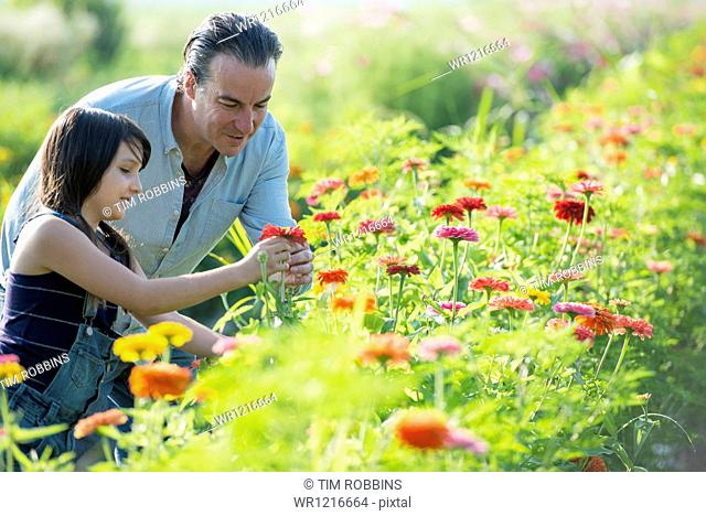 Summer on an organic farm. A man and a girl in a field of flowers