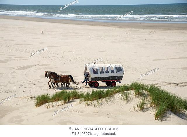 horse cart on beach at Terschelling, Holland