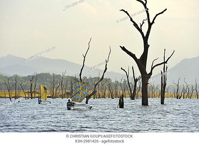 sailing outrigger canoe on Senanayake Samudraya Lake, Gal Oya National Park, Sri Lanka, Indian subcontinent, South Asia