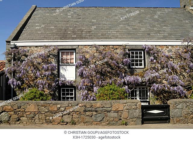 Wisteria Self Catering cottages, Island of Guernsey, Bailiwick of Guernsey, British Crown dependency, English Channel, Atlantic Ocean, Europe