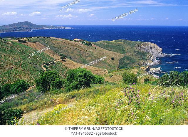Cap de l'Abeille (Bee's Cape), Banyuls sur mer, Cote Vermeille, Eastern Pyrenees, Languedoc-Roussillon, France
