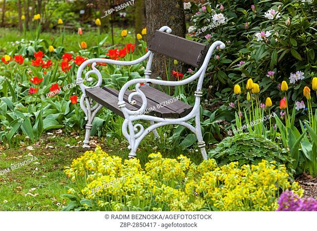 Bench in blooming garden, under the tree, tranquil scenery