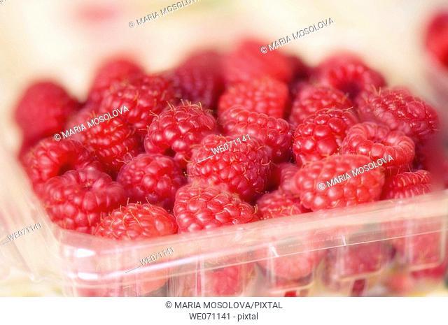 Red Raspberries. Rubus idaeus . January 2007, Maryland, USA