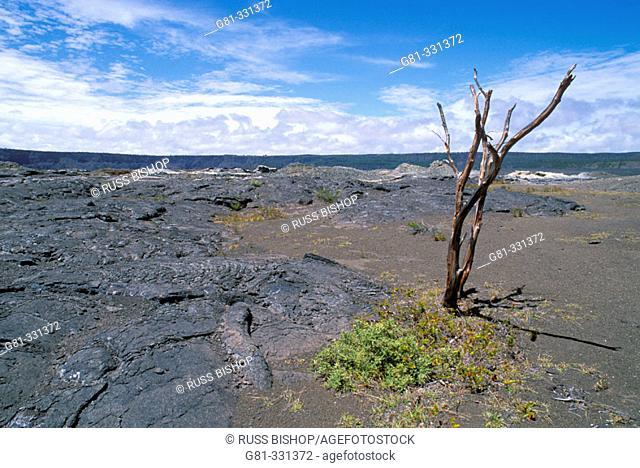 Dead tree in the Kilauea Caldera. Hawaii Volcanoes National Park. The Big Island. USA