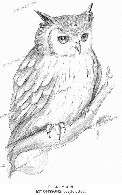 Owl Graphic Black and White, realistic illustration