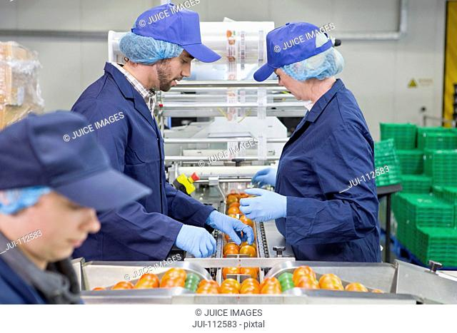 Quality control workers inspecting tomatoes on production line in food processing plant