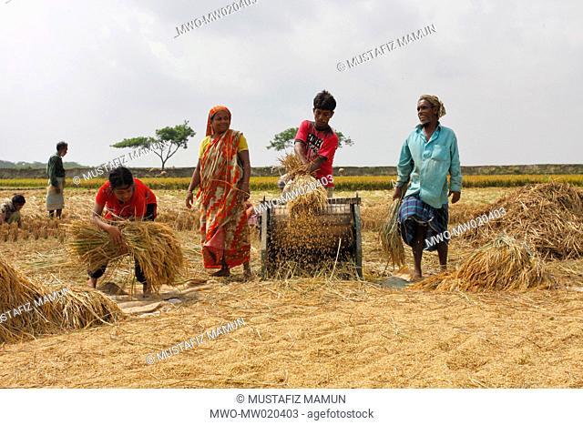Farmers threshing Boro paddy with a machine by the side of a field Comilla, Bangladesh April 30, 2009
