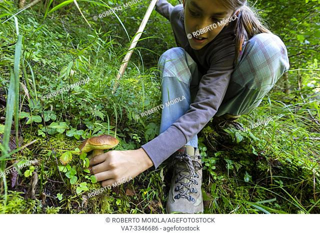 Young girl picking edible mushroom in the woods, Sondrio province, Valtellina, Lombardy, Italy