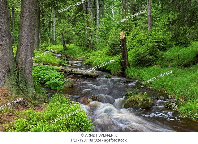 Warme Bode, right-hand headstream of the River Bode in the High Harz mountains, Lower Saxony / Niedersachsen, Germany