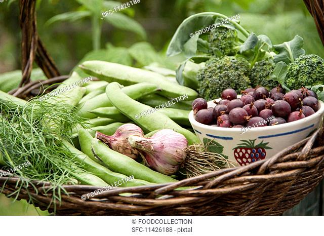A harvest arrangement featuring broad beans, garlic, broccoli, dill and a bowl of jostaberries