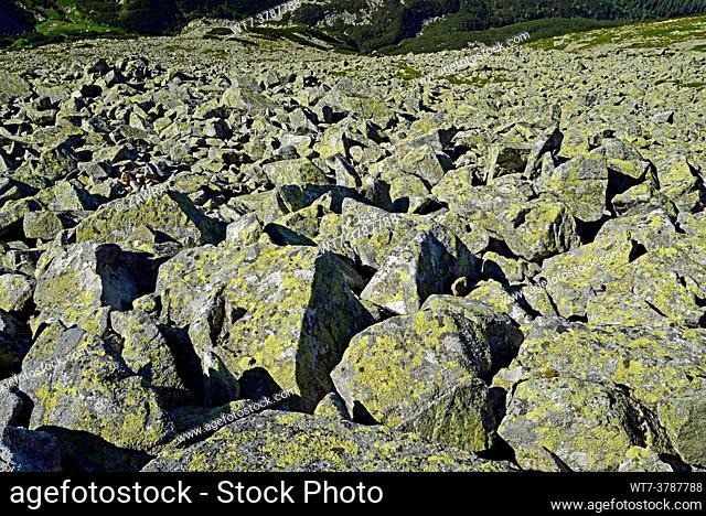 Rock debris on the south side of Swinica