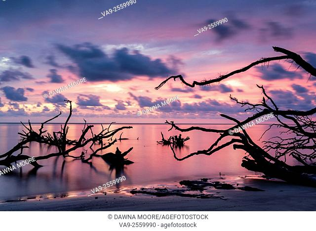 Gorgeous sunrise over the driftwood on the beah at Blackrock Trail, Big Talbot Island State Park, Florida