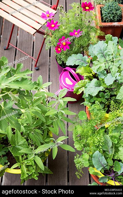 Flowers and vegetables growing on balcony garden