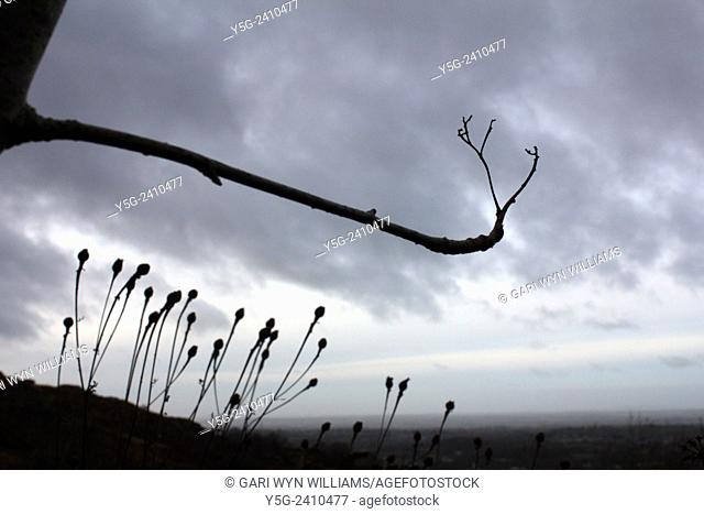 Hand shaped tree branches and dark sky in countryside in wales great britain uk