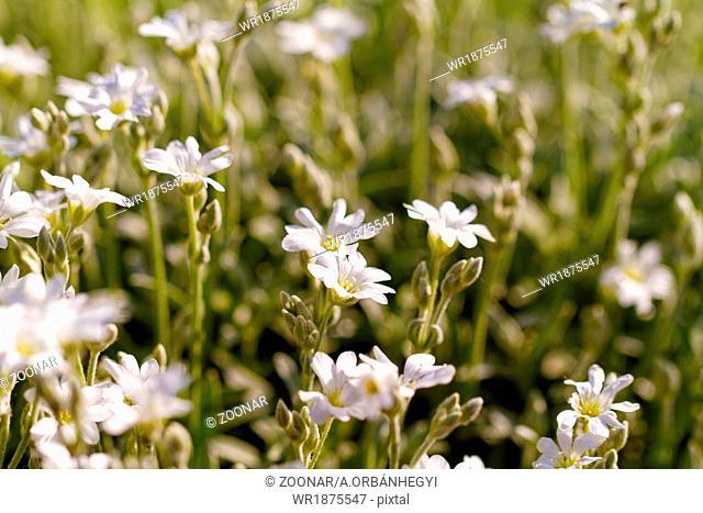 White rock flower garden edging - close up photo