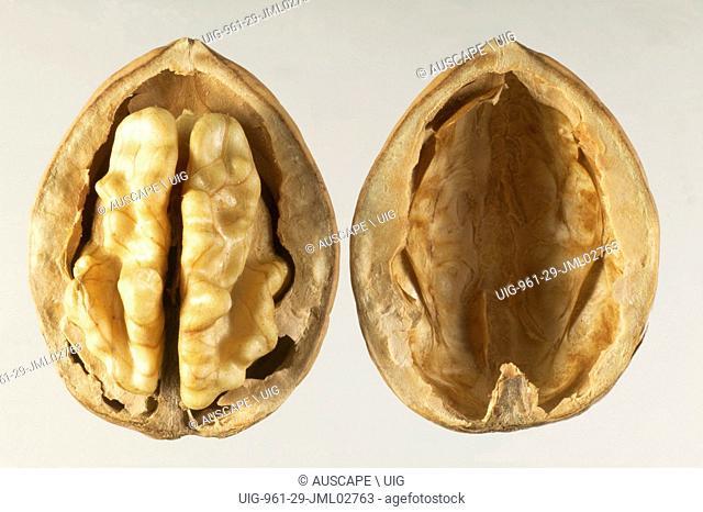 Walnut, Juglans regia, halved. (Photo by: Auscape/UIG)