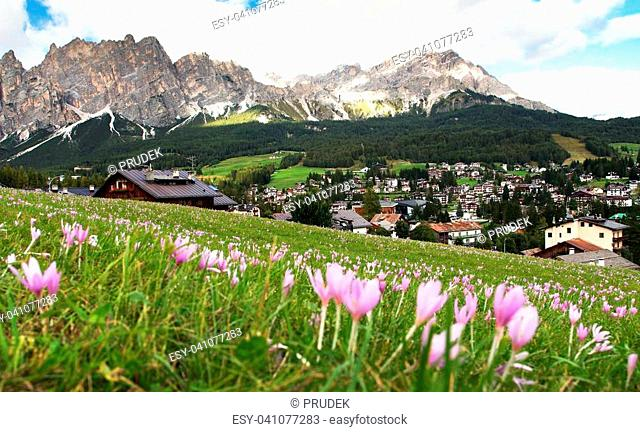 View from Cortina d Ampezzo, meadow with saffrons and mount Cristallo, Alps Dolomites Mountains, Italy