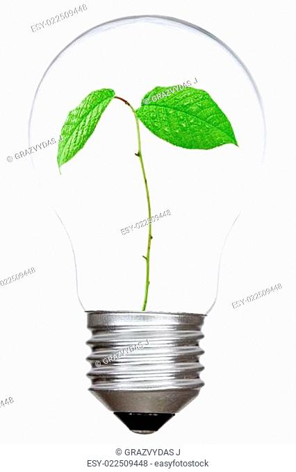 Light bulb with green sprout inside