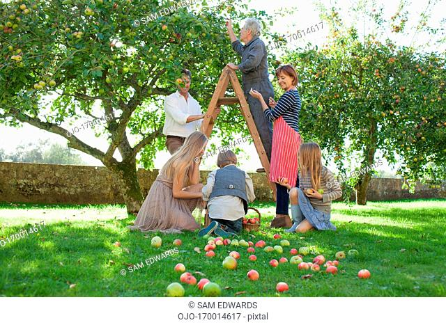 Multi-generation family harvesting apples in orchard
