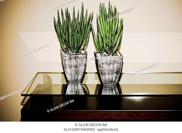 Two houseplants on a table