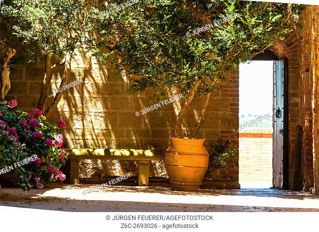Inner courtyard with olive tree in sunlight of palace Massaini, farm building near Montalcino, Tuscany, Italy