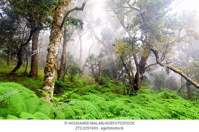 Landscape photo of indigenous forest in misty conditions. Debengeni Falls, Magoebaskloof, Limpopo, South Africa