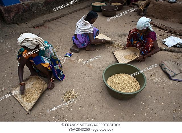Tribal women sorting peas as a collective work ( Bastar region, India)