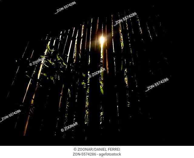 Dark background nature with lights coming from beh