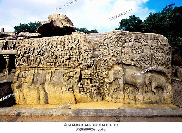 Bas relief arjunas penance , Mahabalipuram Mamallapuram , Tamil Nadu , India