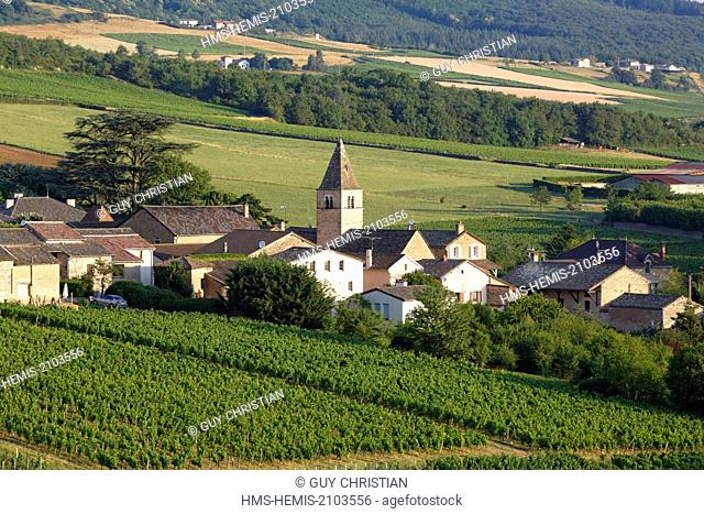 France, Saone et Loire, village of Milly Lamartine, vineyard of Maconnais