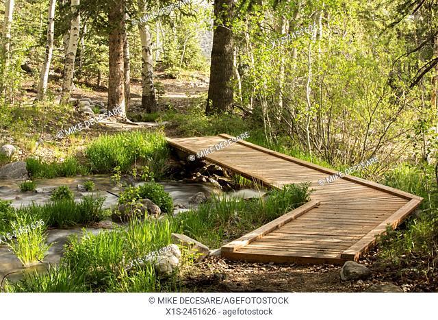 A wood plank walking bridge spans a creek in a forest in Utah