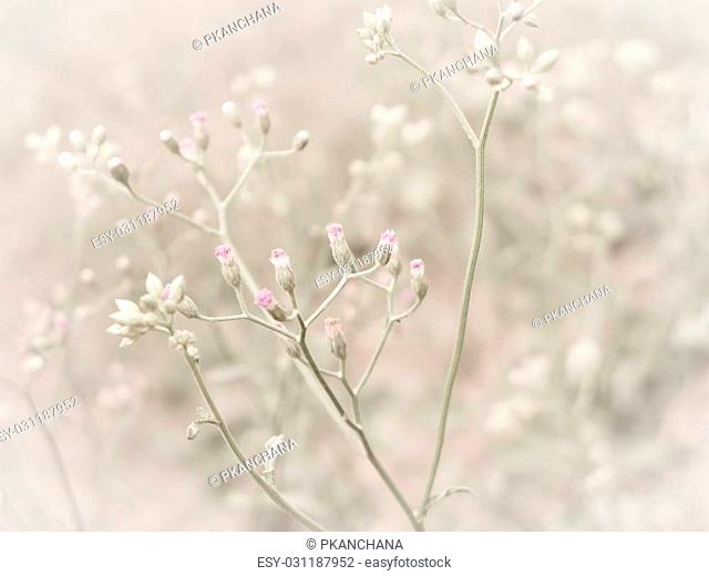 close up flowering grass with soft focus.vintage filter effect